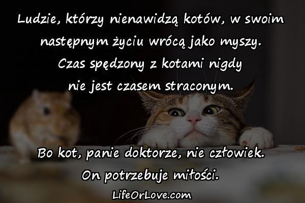 Ludzie, którzy nienawidzą kotów, w swoim następnym życiu wrócą jako myszy. Czas spędzony z kotami nigdy nie jest czasem straconym. Bo kot, panie doktorze, nie człowiek. On potrzebuje miłości.
