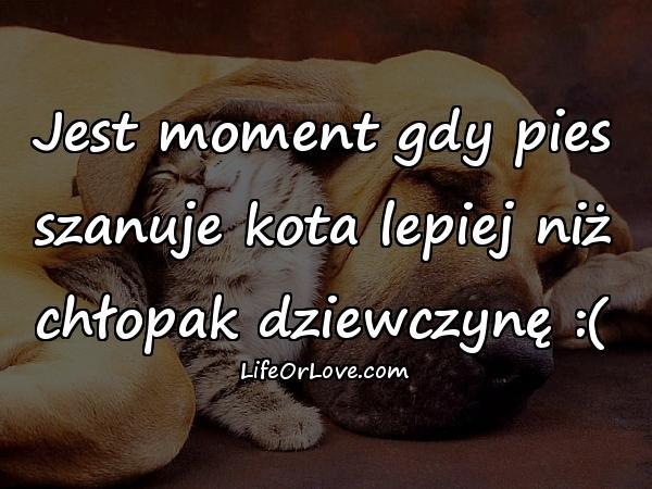 Jest moment gdy pies szanuje kota lepiej niż chłopak dziewczynę :(