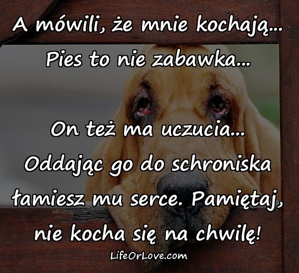 A mówili, że mnie kochają... Pies to nie zabawka... On też ma uczucia... Oddając go do schroniska łamiesz mu serce. Pamiętaj, nie kocha się na chwilę!